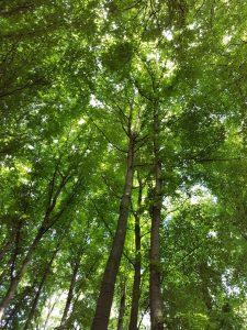 Blätterkuppel